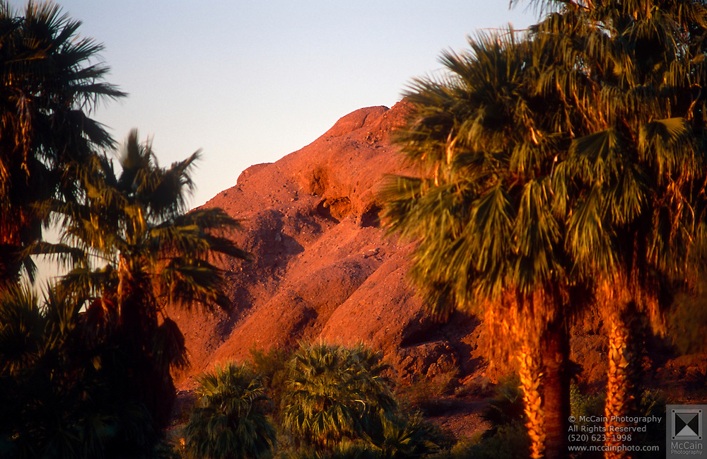 View of palm trees and mountain in the background at sunset, Phoenix, Arizona..Subject photograph(s) are copyright Edward McCain. All rights are reserved except those specifically granted by Edward McCain in writing prior to publication...McCain Photography.211 S 4th Avenue.Tucson, AZ 85701-2103.(520) 623-1998.mobile: (520) 990-0999.fax: (520) 623-1190.http://www.mccainphoto.com.edward@mccainphoto.com