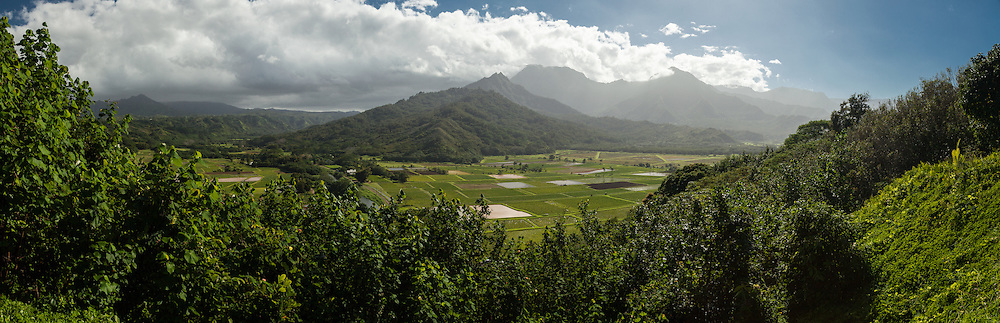 Traditional taro farms along the Hanalei River provide habitat in the Hanalei National Wildlife Refuge on Kauai.