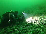 A diver in a drysuit films life on the sea floor in the frigid, green, plankton rich waters of Williams Cove, Tracy Arm, Alaska.