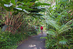 Hawaii Tropical Botanical Garden is a 37-acre nature preserve and sanctuary on Onomea Bay, north of Hilo.