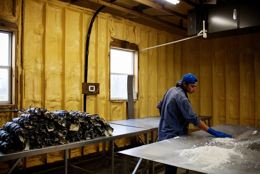 A migrant worker cleans a table after sorting a shipment of returned skins that the client said were not up to par on Daneco Alligator Farm in Houma, Louisiana on Friday, February 19, 2010. Daneco currently has 14,000 skins sitting in cold storage without a buyer. It seems improbable that this little-known business is dependent on high society and expendable incomes around the world, but their demand fluctuates noticeably with the global marketplace. The Ledet's say that with the recession their clients have demand better skins for less.