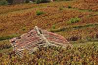 vineyards in Beaujolais..the Charmettes have vineyards in this region at Vaux en Beaujolais.. September 15, 2007..Photo by Owen Franken for the NY Times.