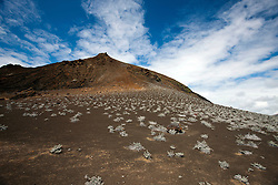 Landscape view of the volcanic peak of Bartolome Island with Grey Matplants (Tiquilia nesiotica), Galapagos Islands National Park, Bartolome Island, Galapagos, Ecuador