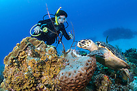 A young diver looks on while a Hawksbill Sea Turtle feeds on a Sponge<br /> <br /> Shot in Cayman Islands