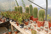 Urban Jungle Plant Nursery and Café, Beccles, Suffolk, England, UK - cacti in arid zone polytunnel