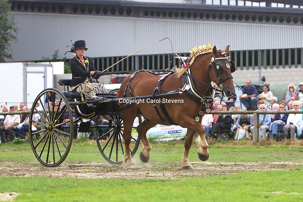 Zoe Meek driving Glen Cass's Suffolk Punch, Kentwell Paige<br /> 3rd  Ladies' Cart Class