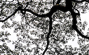 Tree pattern, high key