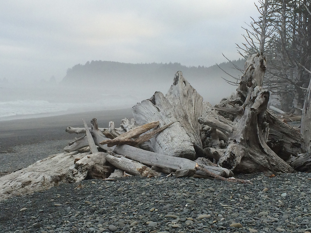 Logs on beach in fog