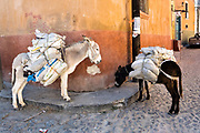 Donkeys loaded with bags of charcoal wait on Aparicio Street in San Miguel de Allende, Guanajuato, Mexico.