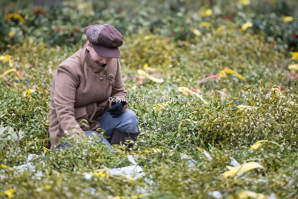 Burford House Garden Stores, Tenbury Wells, Worcestershire, UK. 5th December 2017. Buyers flock to Burford House in Tenbury Wells to take part in the annual mistletoe, wreaths, holly and Christmas tree auctions. Pictured: A young woman inspects mistletoe. // Lee Thomas, Tel. 07784142973. Email: leepthomas@gmail.com  www.leept.co.uk (0000635435)