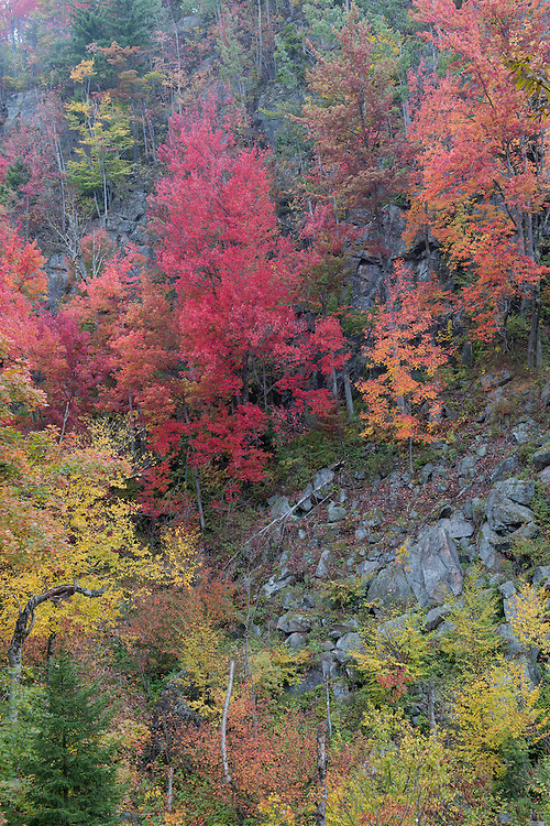 Beautiful fall color on mountain side near Bald Mountain off Rt 28