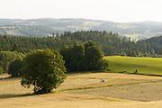 Landschaft bei Schwarzenberg, Mühlviertel, Böhmerwald, Niederösterreich, Österreich | landscape near Schwarzenberg, Muehlviertel, Bohemian Forest, Austria