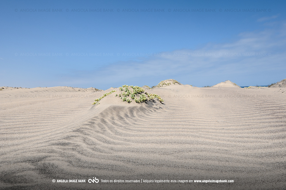 Dunas de areia branca e plantas halófitas no Namibe perto do Flamingo Lodge. Província do Namibe. Angola