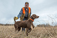 John Zeman works with his German Shorthaired Pointer, Luna during a pheasant hunt.