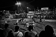 """Brasilito - February 2019 - Ticos have developed their own version of bull fighting where the bull is the aggressor and the """"improvised bullfighters"""" try to get as close as possible without injury. But, there will be a real cowboy who rides, or attempts to ride a bull.<br /> The riders names are drawn against the bulls. When the riding finally starts it's a fast moving affair. A new bull is sent out just a soon as they round up the previous one.<br /> The bulls are allowed to run free for a couple of minutes after they are ridden to chase those brave enough to stay in the ring. The bullfights in Costa Rica go back to the colonial era, when they emerged together with the development of livestock and Spanish influence. Although the bull cannot be killed, Costa Rica remains one of the few Latin American countries that preserves the tradition of bullfighting. <br /> ©Jean-Michel Clajot"""