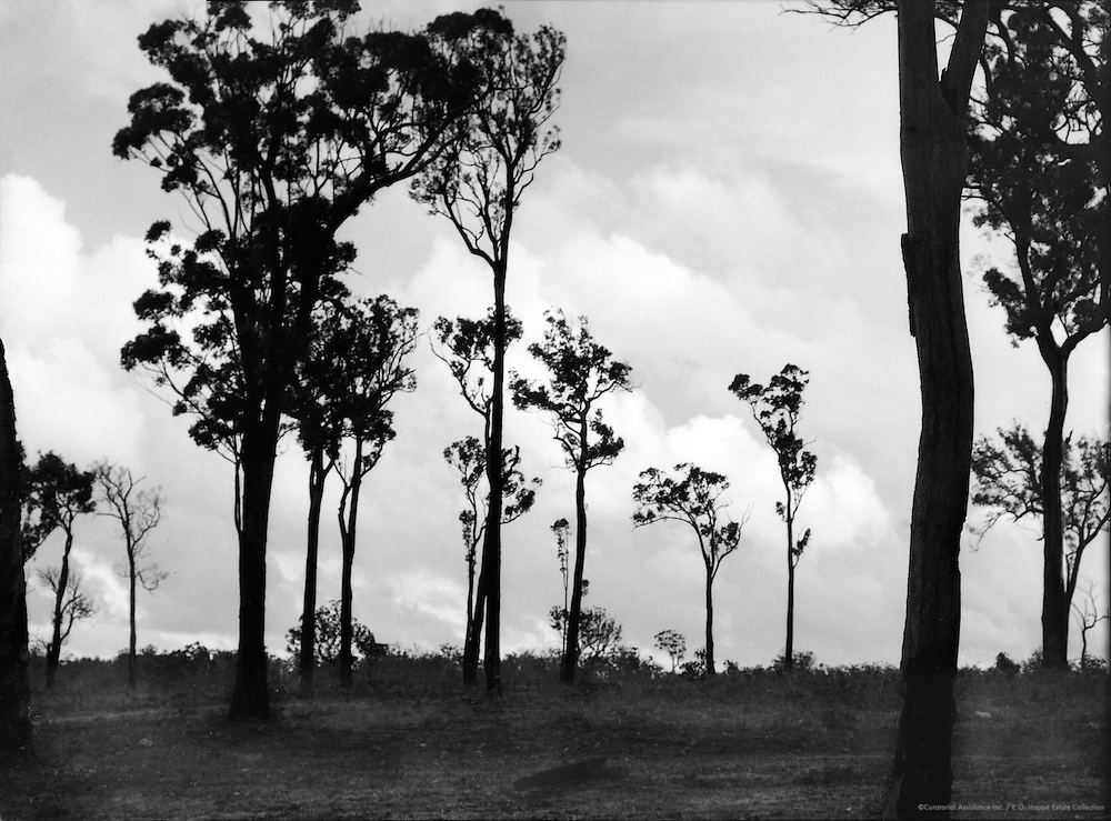 Yarra Trees, Western Australia, 1930