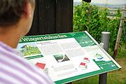 Weinlehrpfad Groß-Umstadt, Odenwald, Hessen, Deutschland