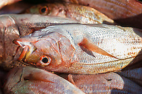 Carpenter catch , Struisbaai Harbour, Struisbaai, Western Cape, South Africa