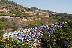 The pelonton rides past an orange grove in the first lap of Stage 3 of the Setmana Ciclista Valenciana - a 137 km road race, between Sagunt and Valencia on February 24, 2018, in Valencia, Spain. (Photo by Balint Hamvas/Velofocus.com)