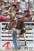 Saddle Bronc rider Brody Cress hangs on to Billings at the Cheyenne Frontier Days rodeo at Frontier Park Arena July 24, 2015 in Cheyenne, Wyoming. Frontier Days celebrates the cowboy traditions of the west with a rodeo, parade and fair.