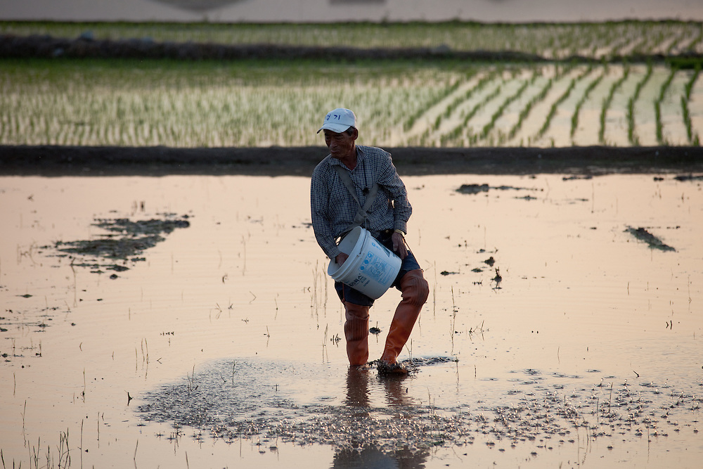 A farmer is seeding rice in a field located at the outskirts of Gyeongju. Gyeongju, South Korea, Republic of Korea, KOR, 20th of May 2010.