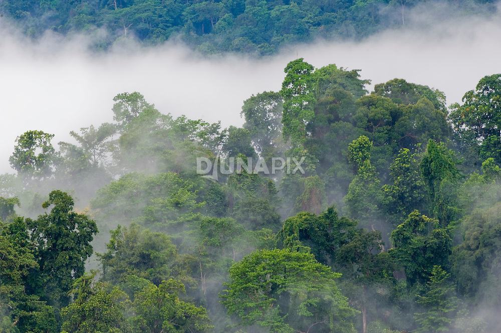 """On this trip, I'm aiming for shots of the forest """"breathing"""", in support of a budding forest carbon project in the region."""
