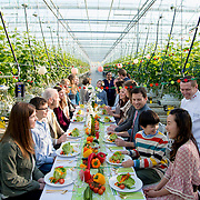 """Advertising for BC Greenhouse Growers Assn, """"Veggie Day"""" promotional campaign"""