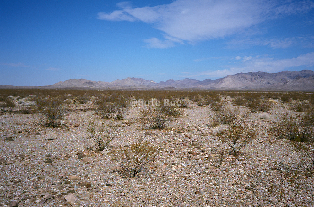 scenic photo of desert