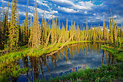 Wetland on the Dempster Highway (KM 210 - 215)<br /> Dempster Highway<br /> Yukon<br /> Canada