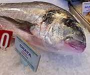 "The gilt-head (sea) bream (Sparus aurata), or orata, is found in the Mediterranean Sea and eastern North Atlantic Ocean. The photo was taken at Rialto Pescheria, or fish market, in Venice, Italy. In Italy, the fish is called ""orata"" (meaning golden). In Croatia it is ""ovrata"", ""orada"", ""lovrata"" or ""komar?a"". ?n Turkey the fish is referred to as ""çipura"" or ""çupra"". In Greece and Cyprus it's ""tsipoúra"" (????????). In Malta it is called ""awrata"". In Albania is is called ""koce"". In Israel it is known as ""Chipura"" or ""Denisse"".  Venice, the romantic ""City of Canals"" stretches across 117 small islands in the marshy Venetian Lagoon along the Adriatic Sea in northeast Italy, Europe. The Republic of Venice wielded major sea power during the Middle Ages, Crusades, and Renaissance."
