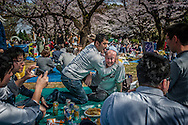 "As o-hanami (""flower viewing"") goes on, and the alcohol consumption progresses, things tend to get wilder in parks throughout Tokyo.  Yoyogi Park, Tokyo, Japan."
