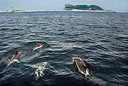 Spanje, Gibraltar, 8-6-2006Dolfijnen in de baai van Algeciras. Op de achtergrond Gibraltar Foto: Flip Franssen