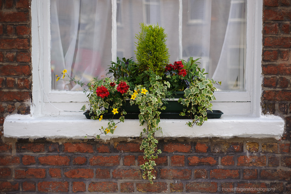 Window Boxes from the windows of the Georgian Buildings on Leeson Street in Dublin