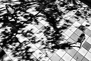 Pavement and shadows at Fordham University in Lincoln Center, New York City.