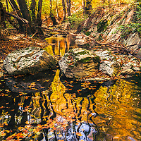 Perfect autumn forest scene with a river