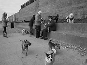 Dogs and owners on Cooden Beach,  Bexhill on Sea. 14 January 2016