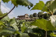 ITALY, Franciacorta area, the countryside around Erbusco