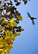 Pocos de Caldas_MG, Brasil...Plano de manejo das Reserva Particular do Patrimonio Natural (RPPN) em Pocos de Caldas, Minas Gerais...The Private Reserve of Natural Heritage (RPPN) in Pocos de Caldas, Minas Gerais...Foto: JOAO MARCOS ROSA / NITRO .