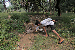 October 10, 2018 - Mumbai, Maharashtra, India - A boy shows marks on dead deer  found in the forest area that was allegedly killed by leopard in Mumbai on October 10, 2018..One of the the forest cover is called as Aarey Colony and is home to 76 species of birds, 86 species of butterflies, 13 species of amphibians, 38 varieties of reptiles, 19 varieties of spiders and 34 different types of wild flowers. The study also found that Aarey has big cats like leopards and other animals like spotted deer, civets, Sambars, barking deer, rusty spotted cat and jungle cat. (Credit Image: © Prash Waydande/NurPhoto via ZUMA Press)