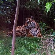 ZLS London Zoo