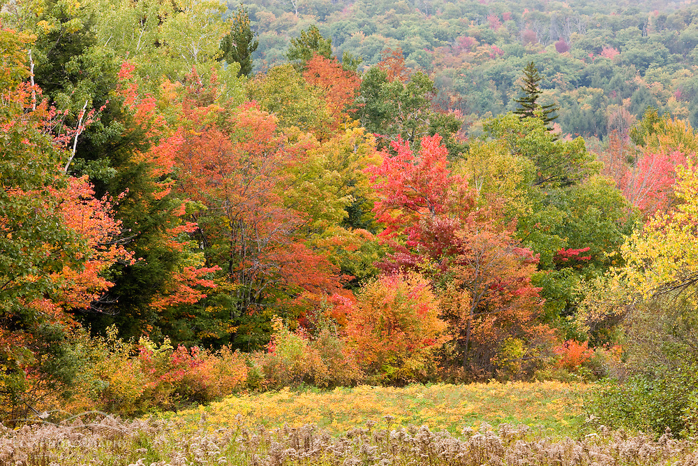 A forest in fall on the edge of a field in Grafton, New Hampshire.