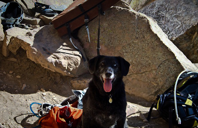 My dog Sen is always with me if I can help it. Here she is waiting for us at the base of the cliff while a few of us were bouldering in Colorado.