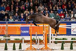 029, Louis W<br /> KWPN Hengstenkeuring - 's Hertogenbosch 2019<br /> © Hippo Foto - Dirk Caremans<br /> 30/01/2019