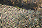 vineyard in South France during late autumn