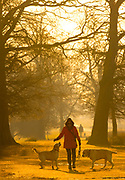 UNITED KINGDOM, London: 26 February 2019. A walker and her dogs make their way through Richmond Park this morning during sunrise on what is set to be the warmest day in February since records began. Temperatures are set to reach up to 20 degrees Celsius in the capital today. Rick Findler / Story Picture Agency