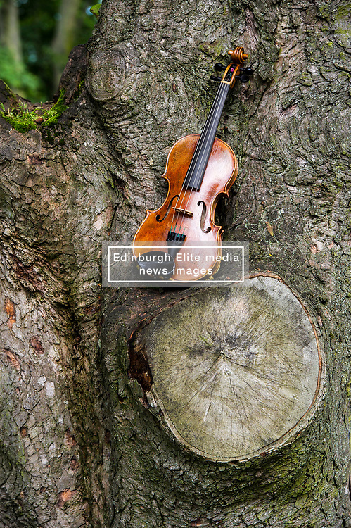 Pictured: The Owen violin.<br /> Violinists were on hand to play at the first public appearance of two instruments made in honour of war poets,  Wilfred Owen and Siegrfried Sassoons.  The violins, crafted by Steve Burnett and insured for £25,000 each, were played at the sycamore tree from which they were made at the Craiglockhart Campus of Napier University in Edinburgh. <br /> Ger Harley | EEm 7 August  2017