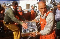 Unloading fish from boat in Tarragona docks; Spain,