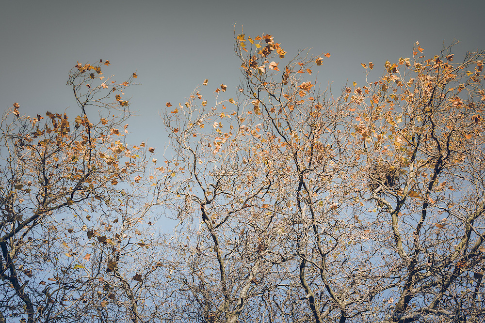 Artisticaslly treated image of Autumn Leaves and Bare Branches