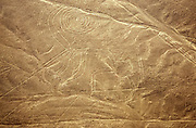 Aerial view of a monkey with a spiral tail. The Nazca Lines are a group of very large geoglyphs formed by depressions or shallow incisions made in the soil of the Nazca Desert in southern Peru. They were created between 500 BC and 500 AD.