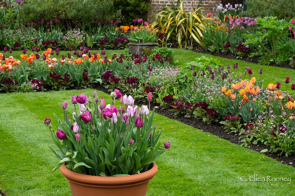 Shades of pink: Tulipa 'Flaming Flag', Tulipa 'Purple Peony' and Tulipa 'Mistress Mystic' in a pot in the Sunken Garden at Chenies Manor, Rickmansworth, Buckinghamshire, UK, April